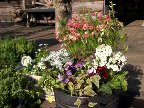 冬の花、寄せ植えワークショップ_3|竜門園