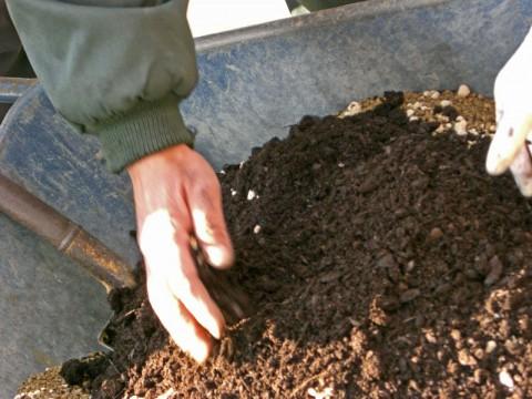 冬の花、寄せ植えワークショップ_2|竜門園