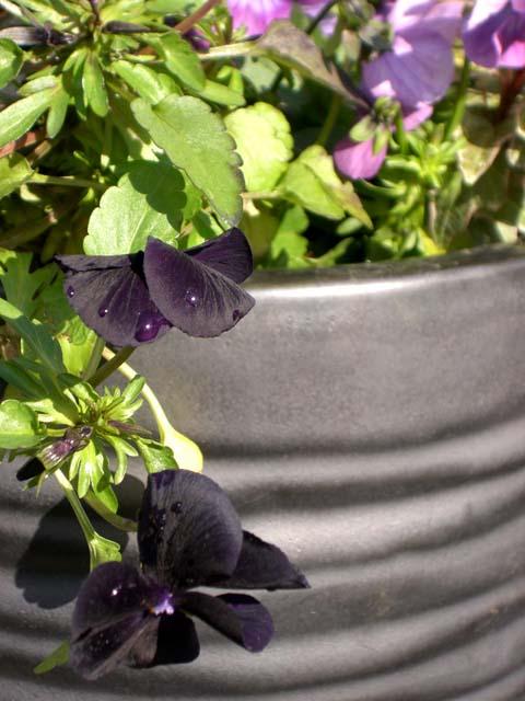 冬の花、寄せ植えワークショップ_4|竜門園