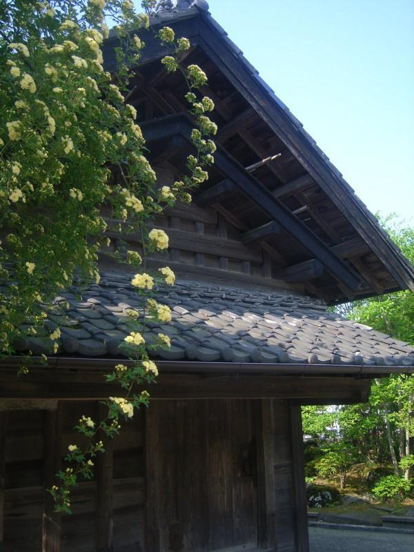 季節の旬花|竜門園
