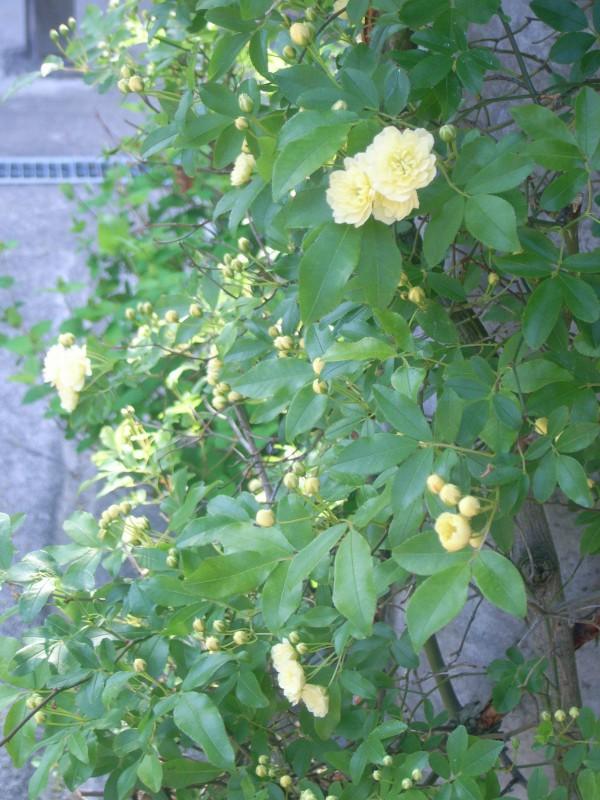 季節の旬花_2|竜門園