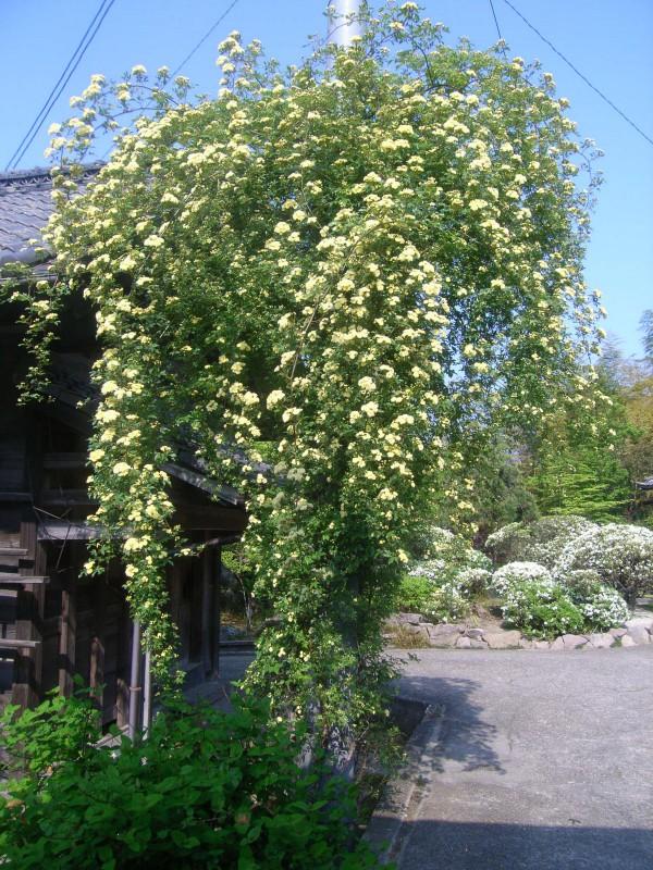 季節の旬花_1|竜門園