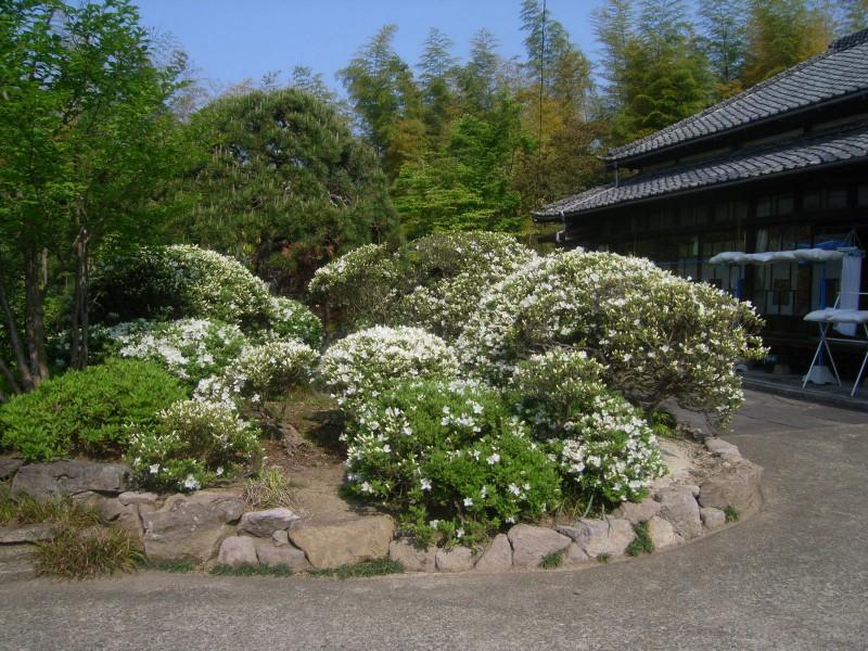 季節の旬花_3|竜門園