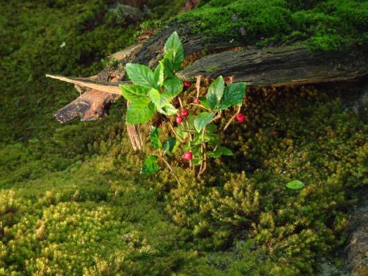 東北ラン展2007 「モスガーデン」_7|竜門園