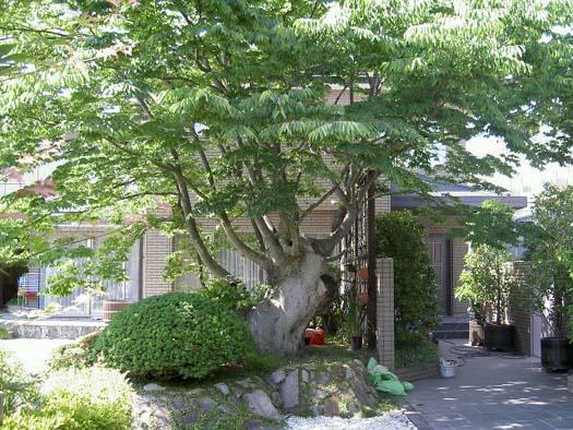 仙台市泉区 M様邸 リガーデン ケヤキ繁る庭|竜門園