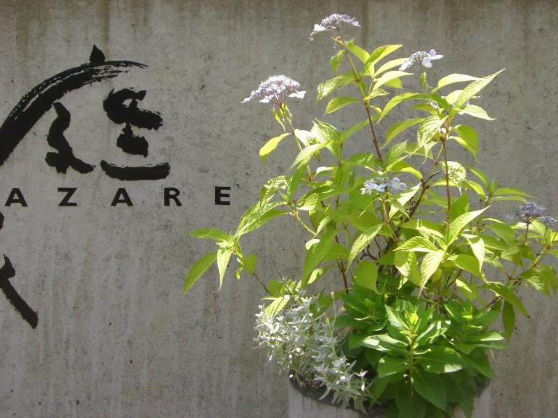 ガーデン展示場G3の草花たち|竜門園