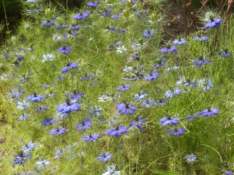 ガーデン展示場G3の草花たち_3|竜門園