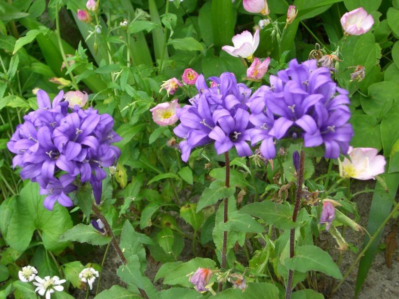 ガーデン展示場G3の草花たち_4|竜門園