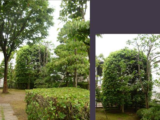 仙台市泉区 O様邸 緑の目隠しフェンス_5|竜門園