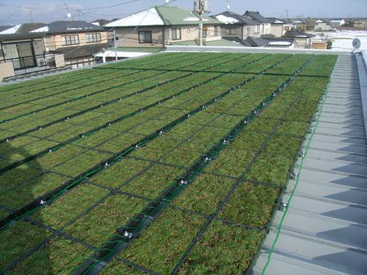 仙台市宮城野区 ガソリンスタンド屋上緑化|竜門園