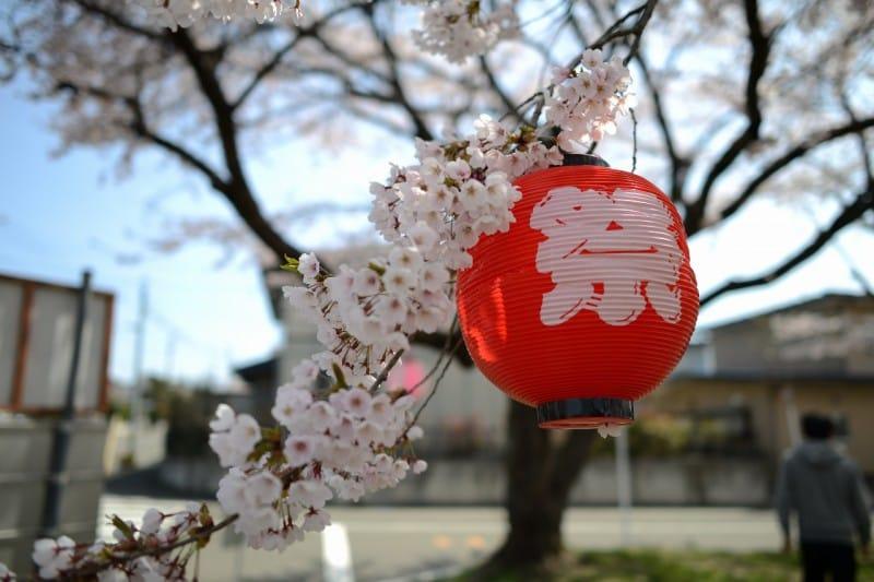 桜も見納め・・・_2 竜門園