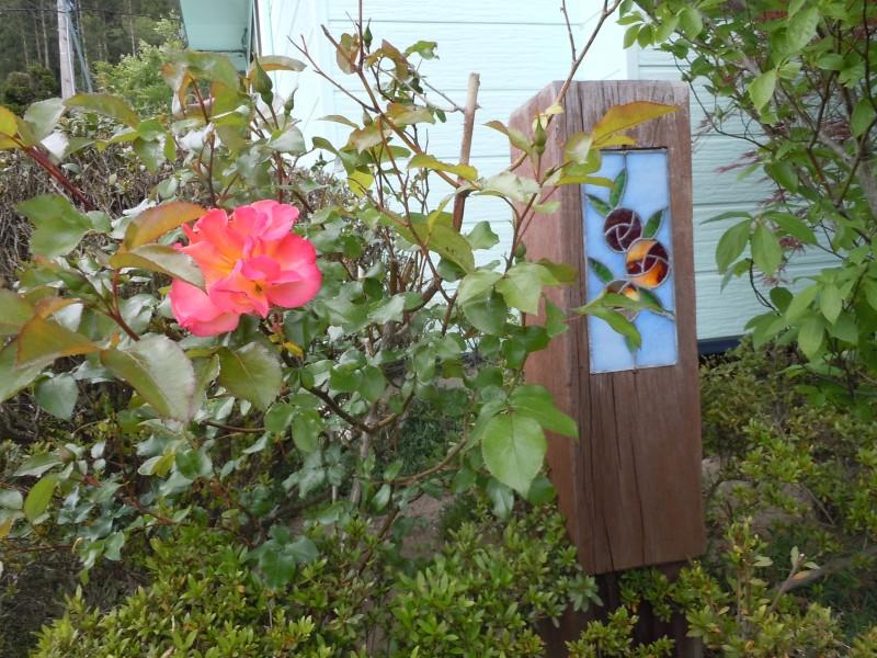 牡丹と薔薇_1|竜門園