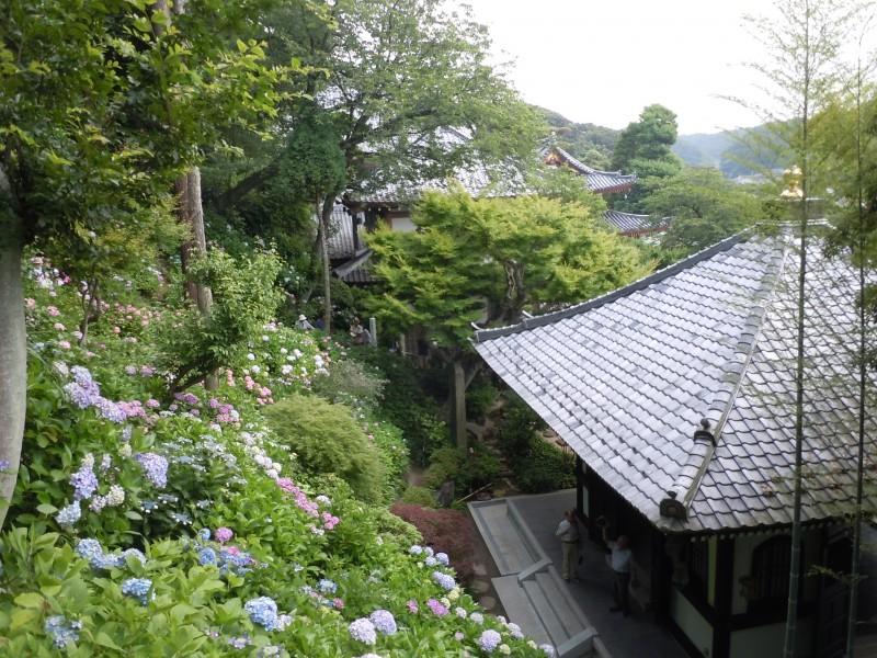 いざ鎌倉_4|竜門園