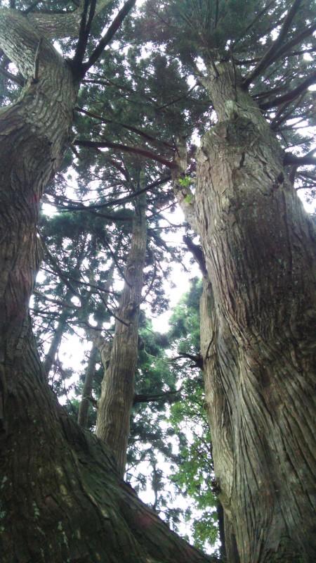 幻想の森_1 竜門園