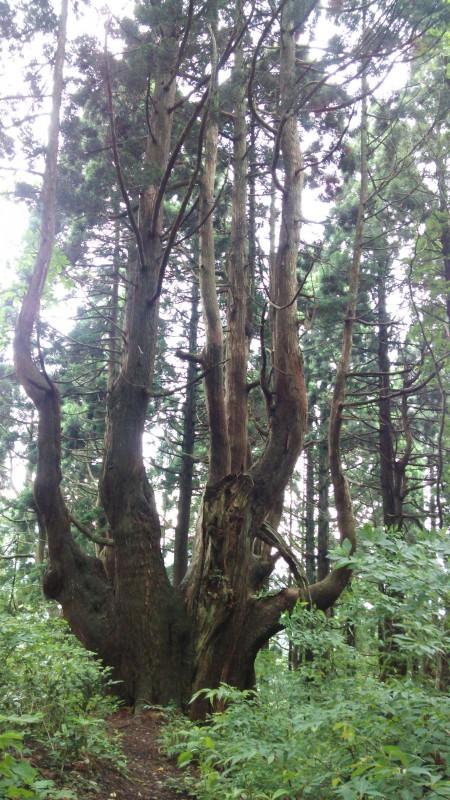 幻想の森_2 竜門園