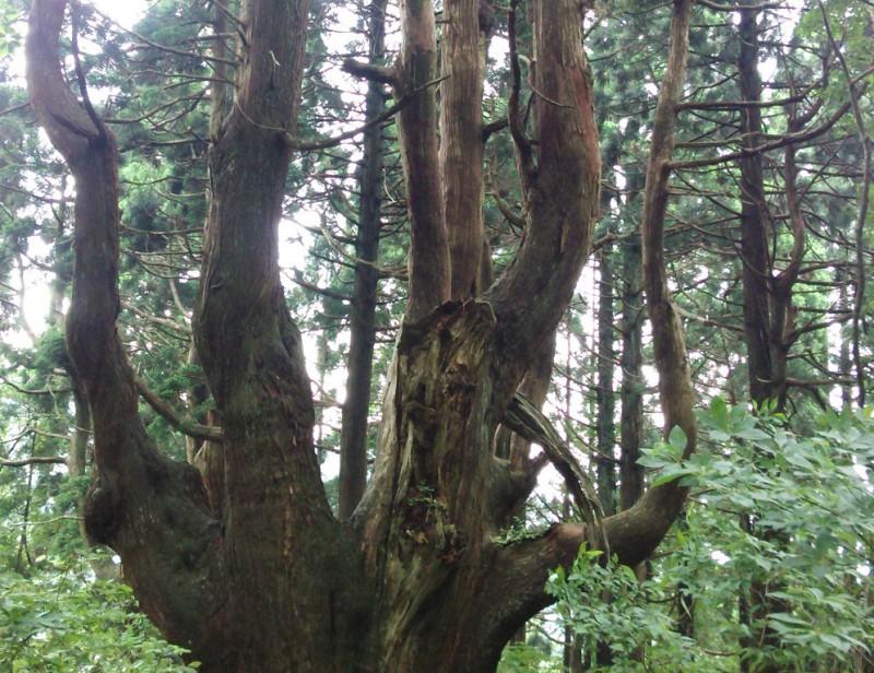幻想の森|竜門園