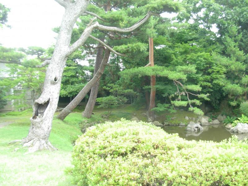 和みの松|竜門園
