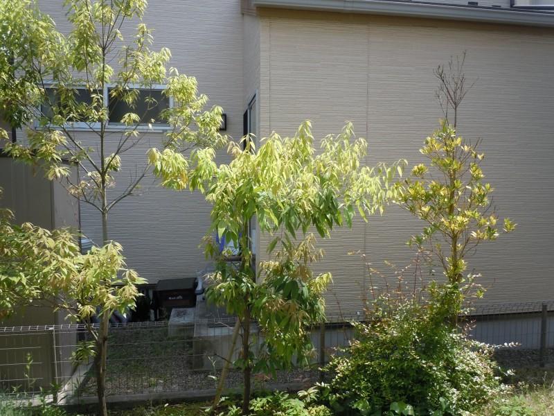 仙台市青葉区 K様邸 「HOT ガーデン」_3|竜門園