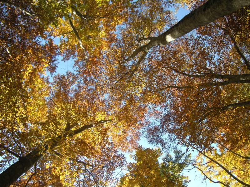 秘密の紅葉|竜門園