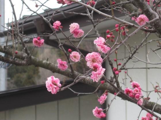 展示場の春|竜門園