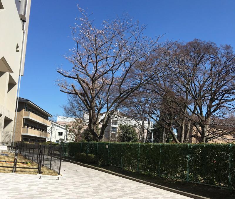 本日開花❀_2|竜門園